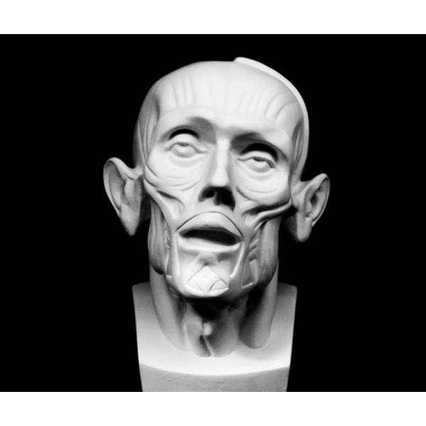 Ģipša Anatomiska galva